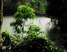 A small lake on the roadside with green thick foliage everywhere.