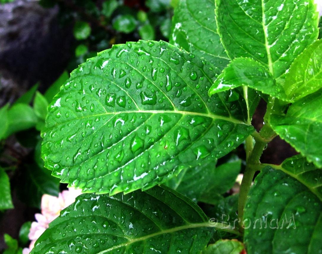 IMG_leaf